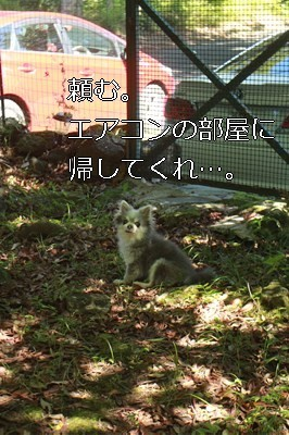 s-IMG_5893.jpg