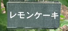 タイトル②