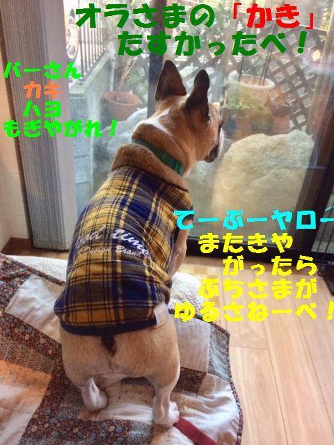 IMG_3604 (1)