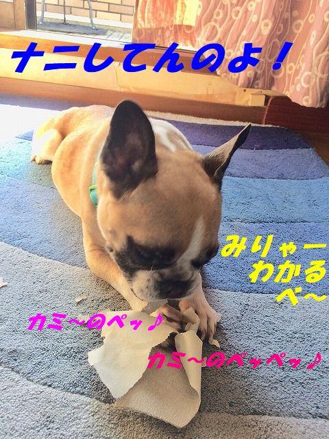 FullSizeR (1)