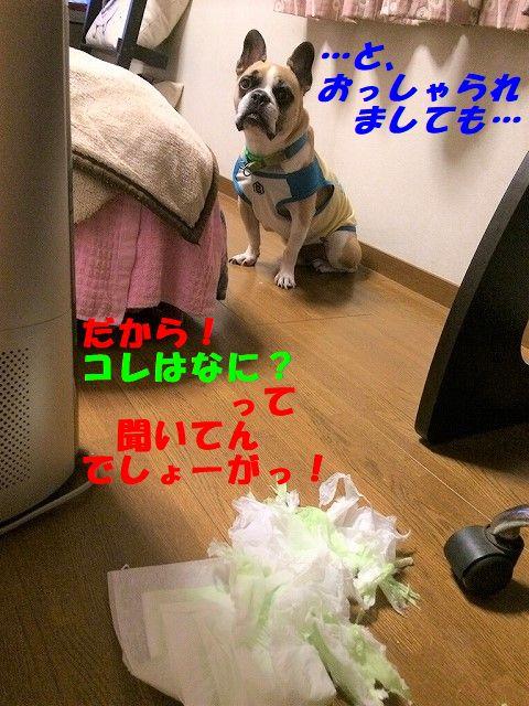 IMG_3257.jpg