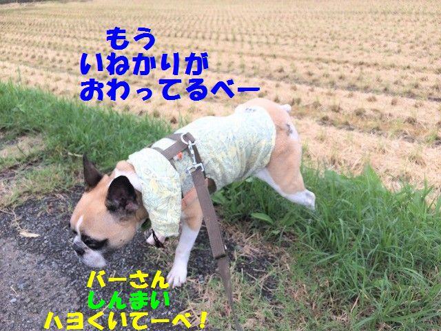 IMG_3394_201809261136408c5.jpg