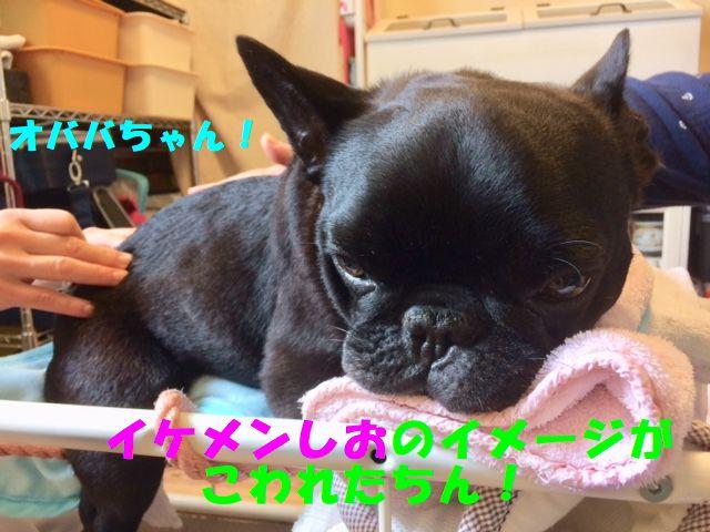 IMG_3556.jpg