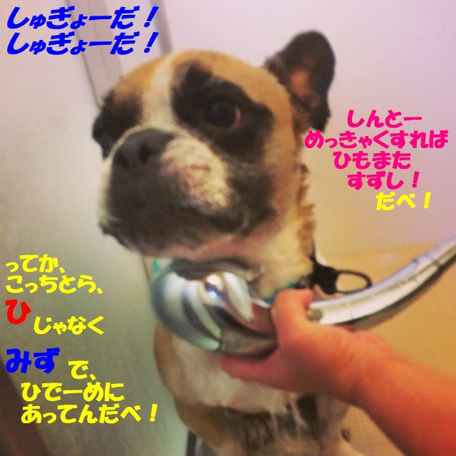 shugyou.jpg