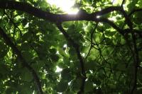 木登り遊び1
