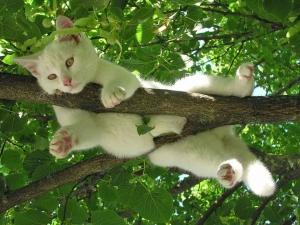 cat-212703_960_720.jpg