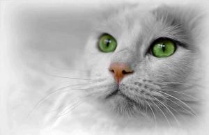cat-721357_960_720.jpg