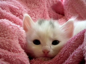 kitten-227009_960_720.jpg