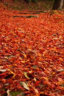 六甲山の紅葉