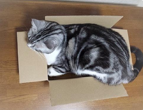箱の中1 (2)