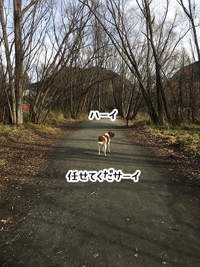 04092018_dog2B.jpg