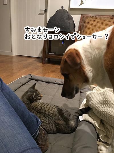 05092018_dog1.jpg