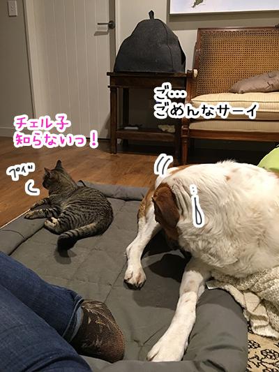05092018_dog2.jpg