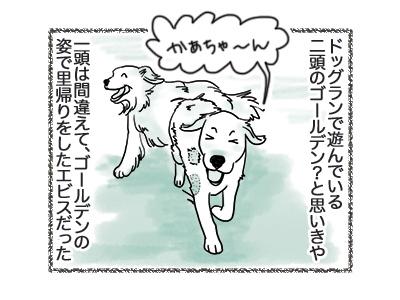 06092018_dog2.jpg
