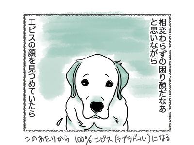 06092018_dog4.jpg
