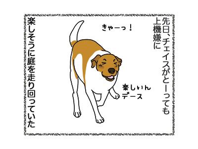 08092018_dog1.jpg