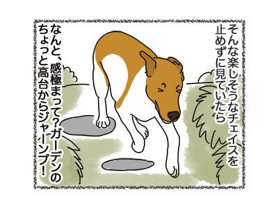 08092018_dog2.jpg