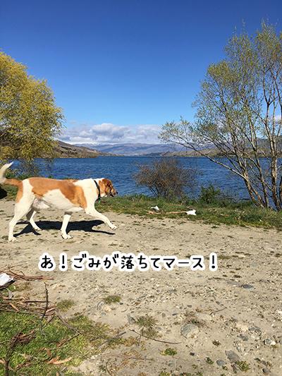 11092018_dog3.jpg