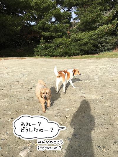 12082018_dog7.jpg