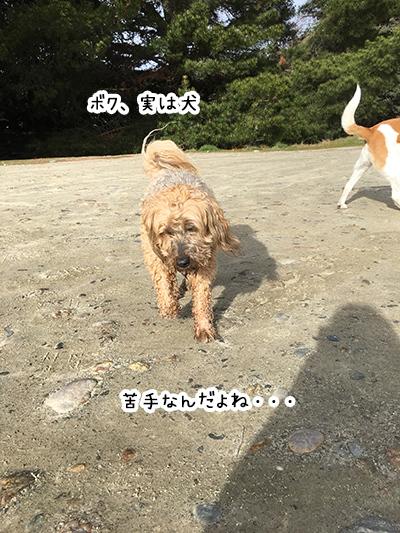 12082018_dog8.jpg