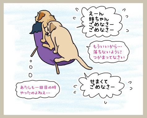 16082018_dog2.jpg