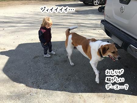 17092018_dog4.jpg