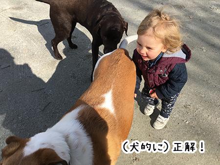 17092018_dog6.jpg