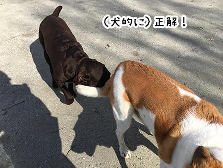17092018_dog7.jpg