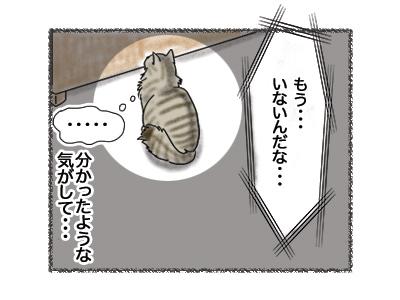 20082018_cat4.jpg