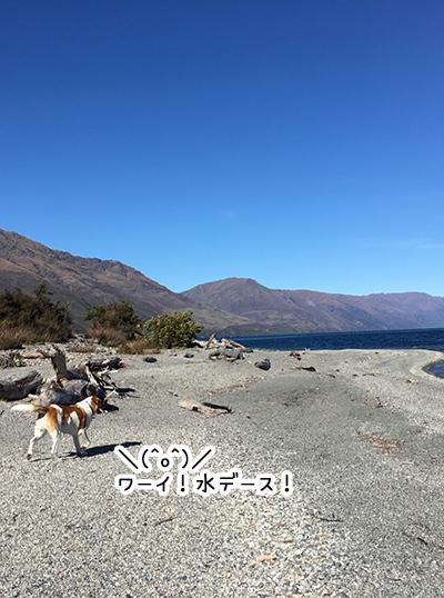 21082018_dog2.jpg