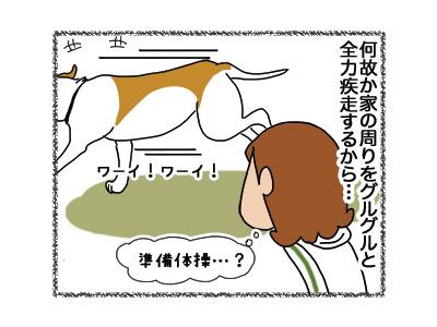 21092018_dog3.jpg