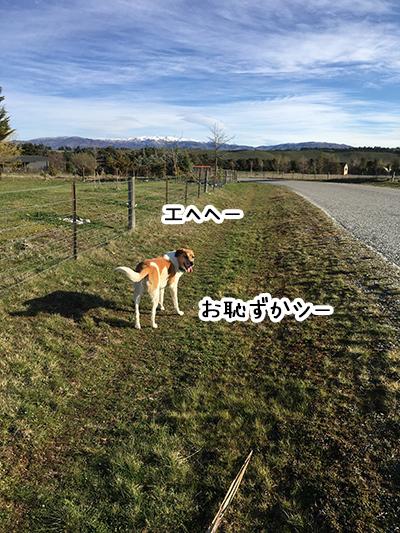 21092018_dog5.jpg