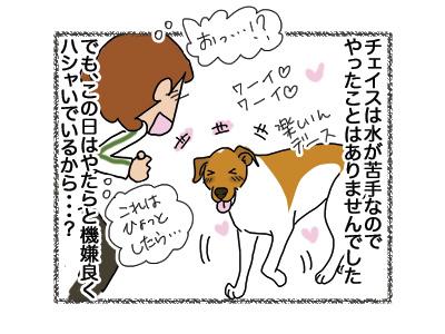 22082018_dog2.jpg