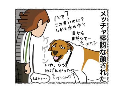 22082018_dog4.jpg