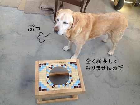 23082018_dog3.jpg