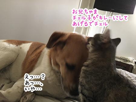 24092018_dog1.jpg
