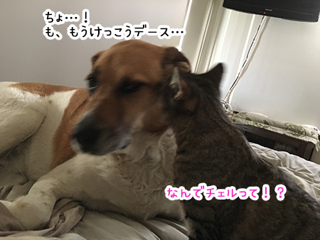 24092018_dog2.jpg