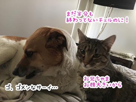24092018_dog3.jpg