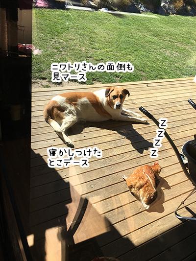 24092018_dog5.jpg