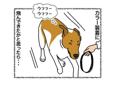26092018_dog3.jpg