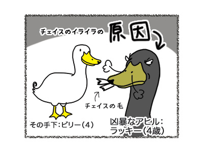 28092018_dog4.jpg