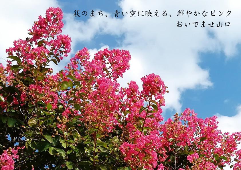 0916pink_kai.jpg