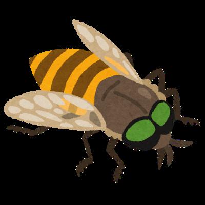 bug_abu.png
