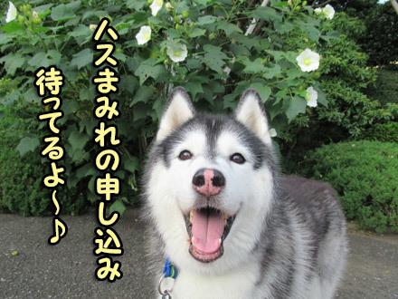 ハスまみれ幹事犬スフレ