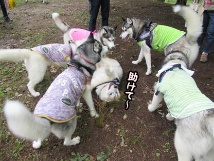 Dog Lovers in KIYOSATO☆2018