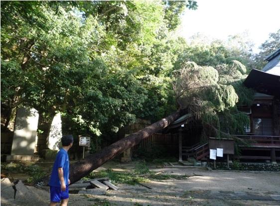 typhoon24_2.jpg