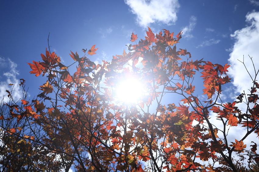 20181008紅葉と太陽