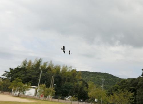 スチレンのエンテ、飛んでれら~! その2。