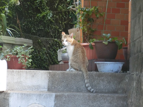 26日のネコ発見1。