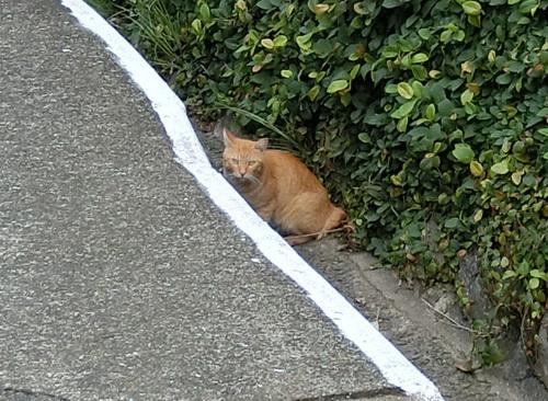 30日のお散歩にて。ネコ発見。